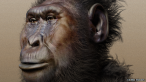 _75356048_paranthropus_boisei_-_forensic_facial_reconstruction