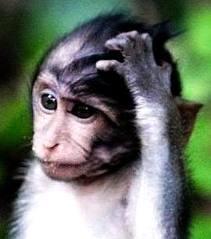 confused-animal