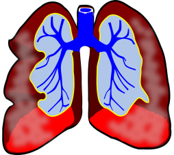 lungs-39981_960_720.png